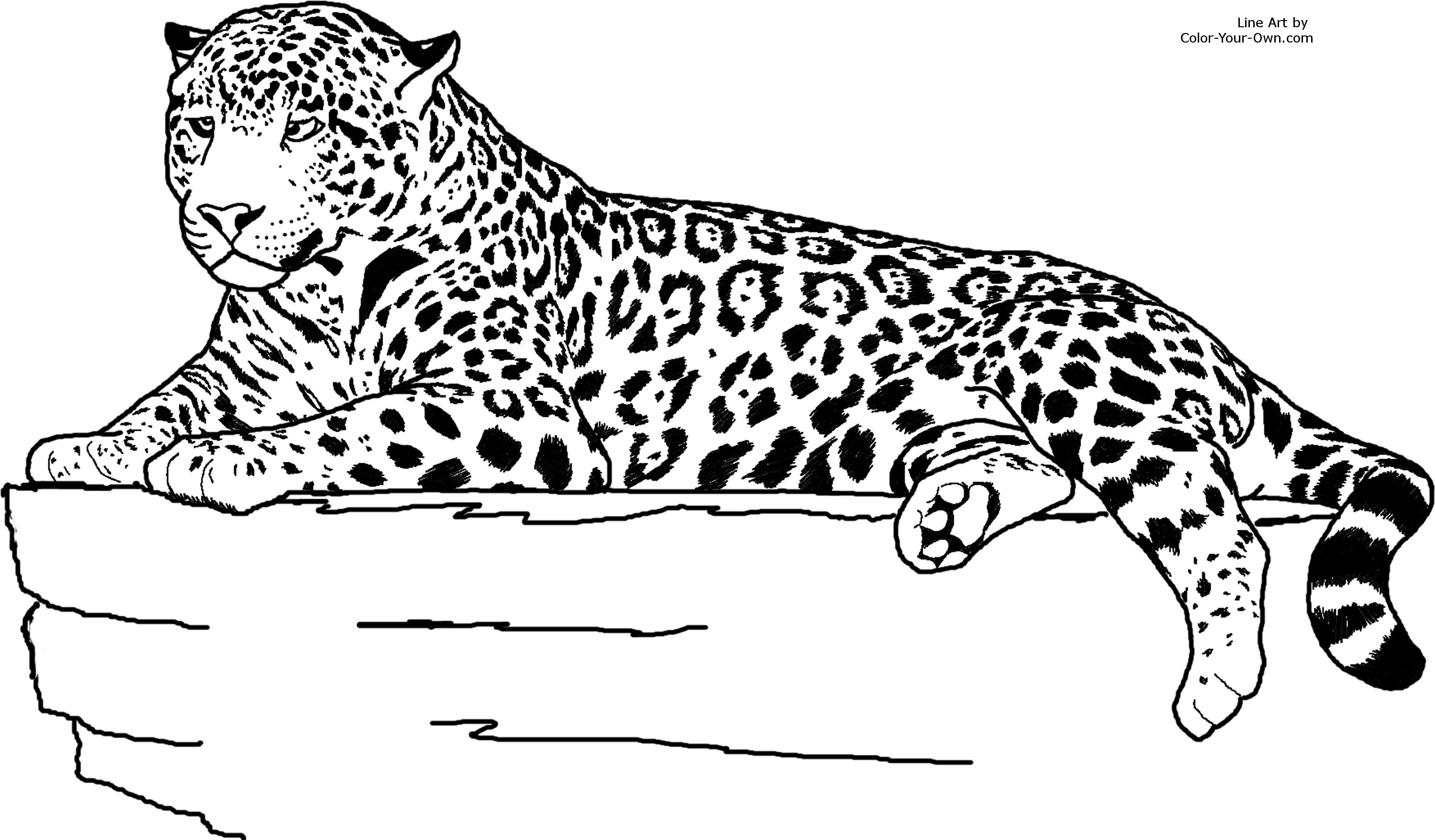 Jaguar Laying Down Coloring Page